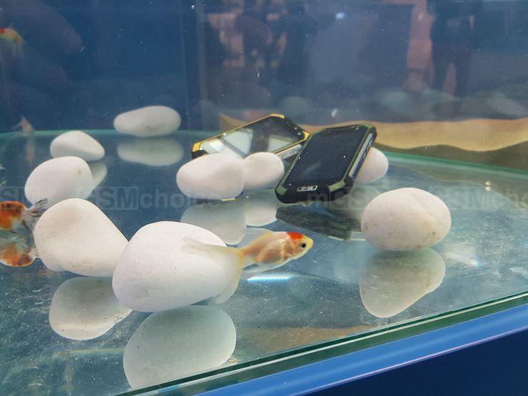 Aquarium at the Blackview's stand