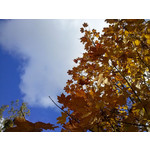 Zdjęcia użytkowników LG Swift L5
