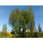 Zdjęcia użytkowników Nokia E66