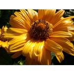 Zdjęcia użytkowników Sony Ericsson Xperia neo V