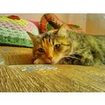 Imágenes de los usuarios Sony Xperia M