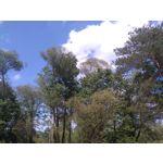 Zdjęcia użytkowników Sony Xperia M4 Aqua