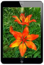 Galeria zdjęć telefonu Apple iPad mini Wi-Fi 16 GB