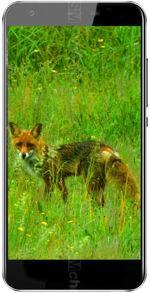 Galeria zdjęć telefonu Black Fox B3 Fox+