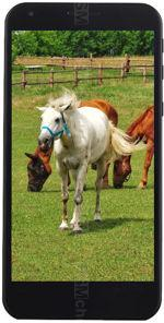 Galeria zdjęć telefonu Vestel Venus V3 5530