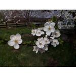 Zdjęcia użytkowników Alcatel One Touch Star 6010D