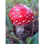 Zdjęcia użytkowników Alcatel OT 993D