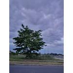 Zdjęcia użytkowników BlackBerry Z10