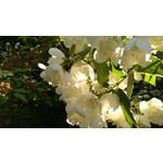 Zdjęcia użytkowników HTC One