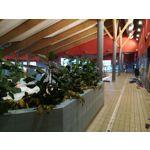 Zdjęcia użytkowników Huawei P10 Lite