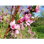 Zdjęcia użytkowników Huawei P20 Lite