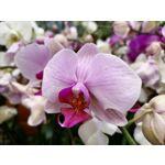 Zdjęcia użytkowników Huawei P40 Lite E