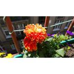 Zdjęcia użytkowników LG G4