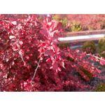 Zdjęcia użytkowników Meizu M2 Note