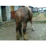 Zdjęcia użytkowników Nokia 5200