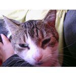 Zdjęcia użytkowników Prestigio MultiPhone 5451 DUO
