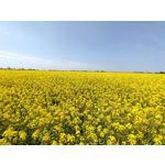 Zdjęcia użytkowników Realme X50 Pro