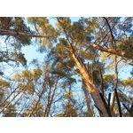 Zdjęcia użytkowników Redmi Note 8 Pro