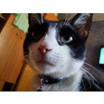Zdjęcia użytkowników Samsung Galaxy Note 3 LTE