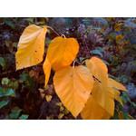 Zdjęcia użytkowników Sony Ericsson Zylo