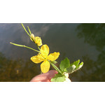 Zdjęcia użytkowników Sony Xperia Z