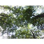 Zdjęcia użytkowników TP-Link Neffos A5